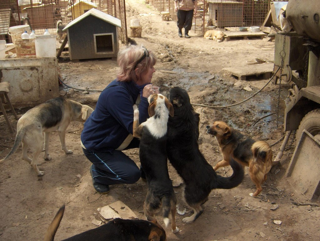 SOS Serbian Animals