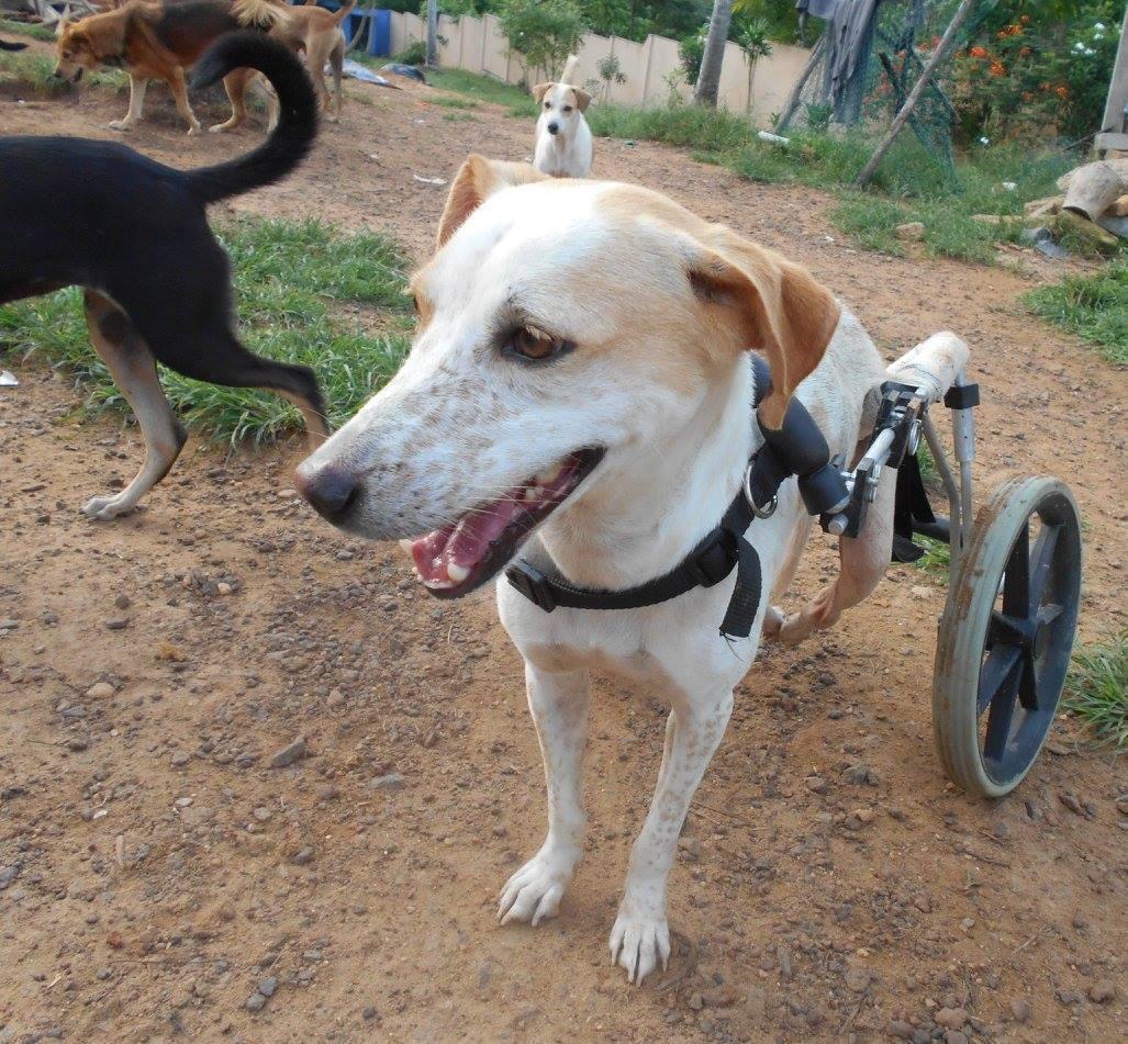 Animal_SOS_Sri_Lanka